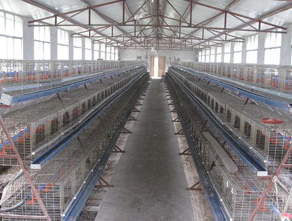 乌骨鸡养殖基地