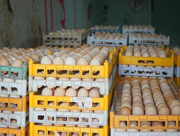 乌骨鸡鸡蛋