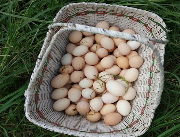 重庆乌骨鸡鸡蛋