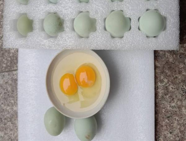 乌骨鸡鸡蛋批发